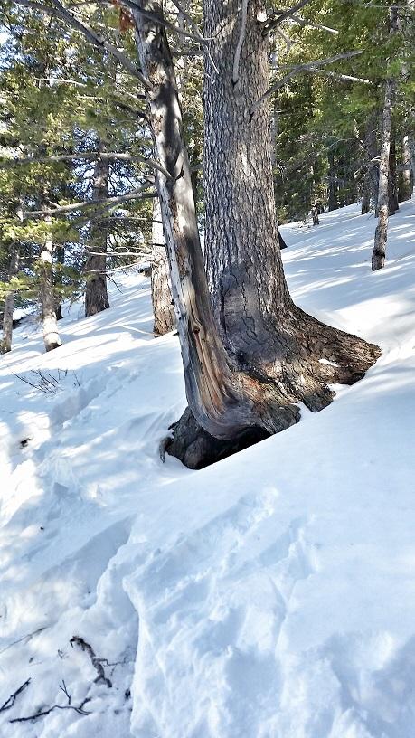 Wyoming Range Bear Den